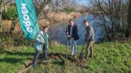 Gemeente Wielsbeke trekt aanvraag in om oude Leiearm te dempen