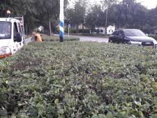 Oisterwijk laat haag snoeien op plek des onheils in Moergestel