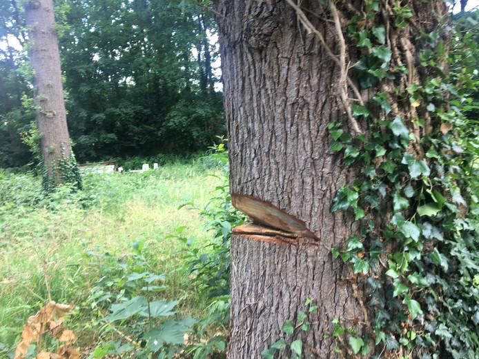 De bewuste boom met forse inkeping.