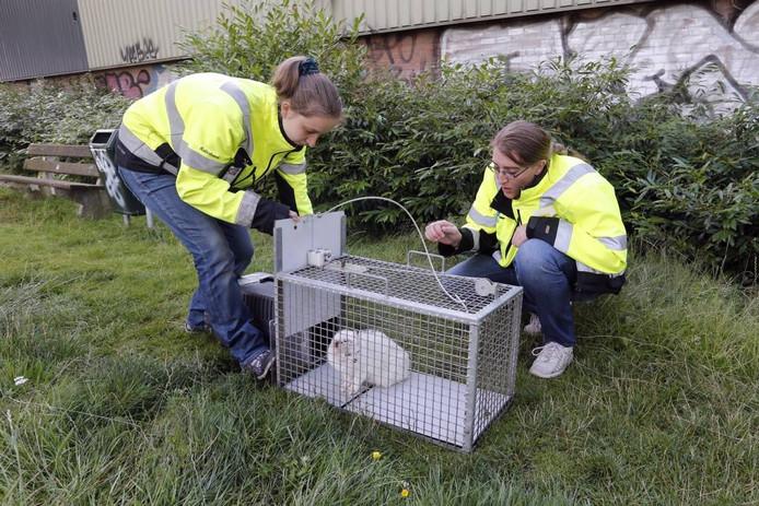 Valéria Dingen (links) en Anouska Werner van de Dierenbescherming hebben een zwerfkat gevangen.