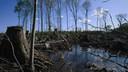 Videostill uit de film Burning, Beeld van een kaalgekapt stuk bos.