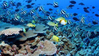 Obama creëert grootste beschermde gebied ter wereld voor kust van Hawaï