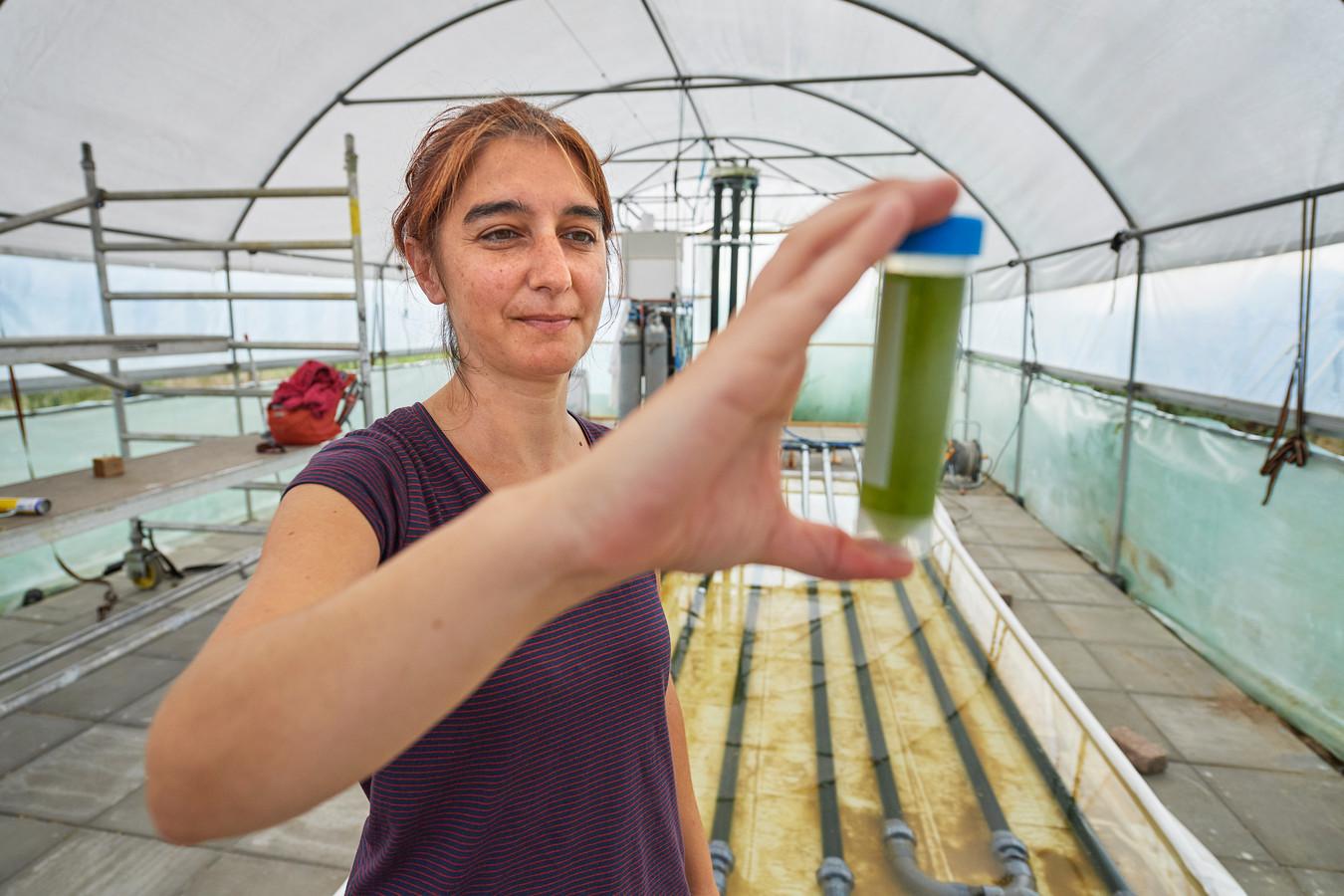 Onderzoekster Tânia Vasconcelos Fernandes bekijkt een buisje met rioolwater met daarin micro-algen.