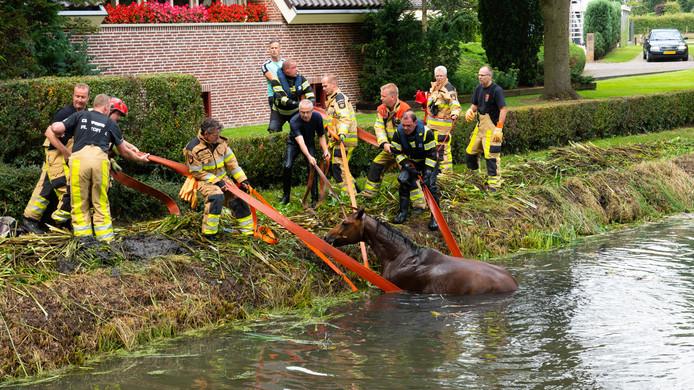 Het paard te water wordt door brandweerlieden vlotgetrokken.