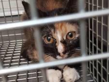 131 katten gefokt en verkocht vanuit Utrechtse woning, maar niemand wordt er voor gestraft