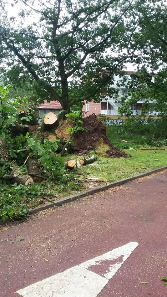 Schade in het Kronenburgerpark.