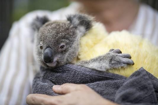 Kinderen haalden via Zapp Your Planet geld op  voor bedreigde dieren in Australië.