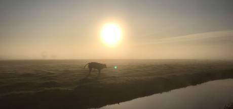 Sprookjesachtige zonsopkomst in de polder