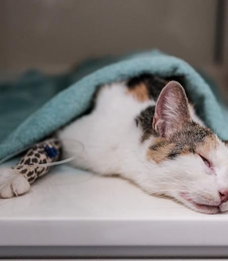 Proef met kosten dierenarts minima met huisdier krijgt vervolg