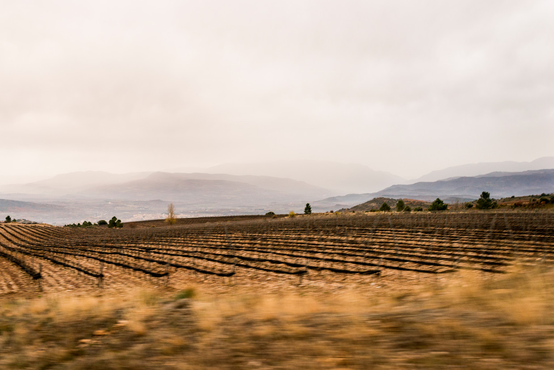 Bodegas Torres (Miguel Torres SA), opgericht in 1870 door Jaime Torres, is een historisch wijnbouwbedrijf gevestigd in Catalonië. Torres is het grootste wijnhuis van Spanje. Beeld Eva Faché
