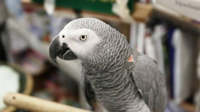 Grofgebekte papegaaien zetten Britse dierentuin op stelten, jong meisje uitgescholden