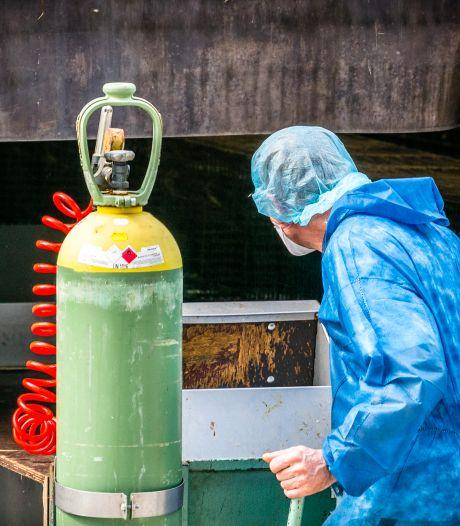 Corona op nertsenbedrijf in Haps; nu 53 bedrijven besmet