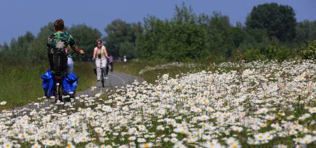 Steeds meer toeristen te fiets door de Biesbosch