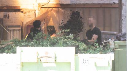 Politie ontdekt 2.000 cannabisplanten en arresteert meerdere verdachten bij inval in loods in Lozer