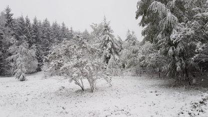 Wisselvallig, winderig en winters in de Ardennen