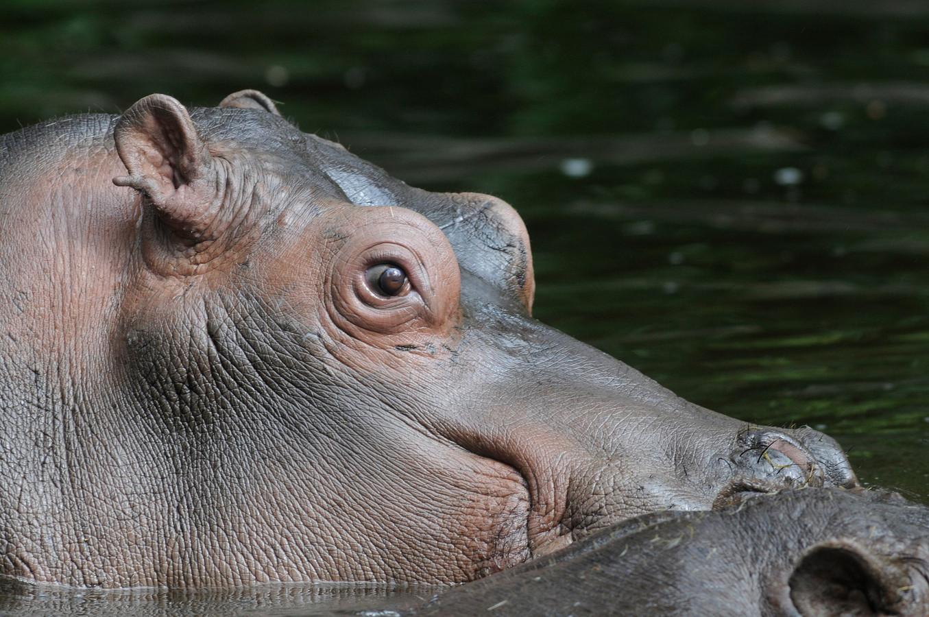 Hasana in haar verblijf in de dierentuin.