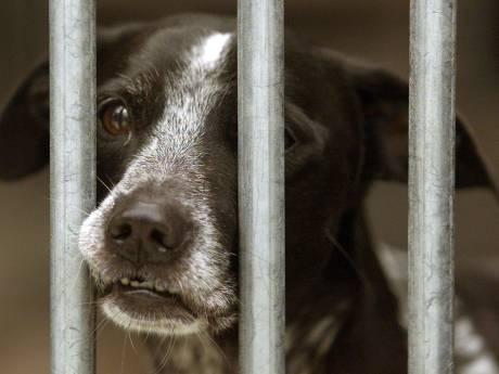 Hond ligt oververhit in eigen braaksel op snikheet balkon