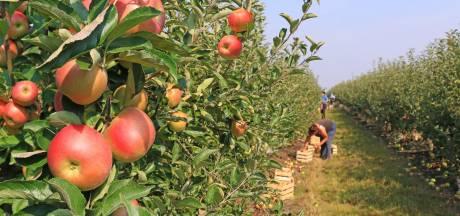 Geen misstanden bij controles groente- en fruittelers