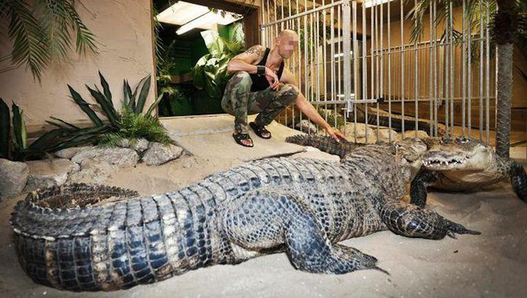 Ferry P. met zijn krokodillen in 2010. Beeld Marc Driessen,
