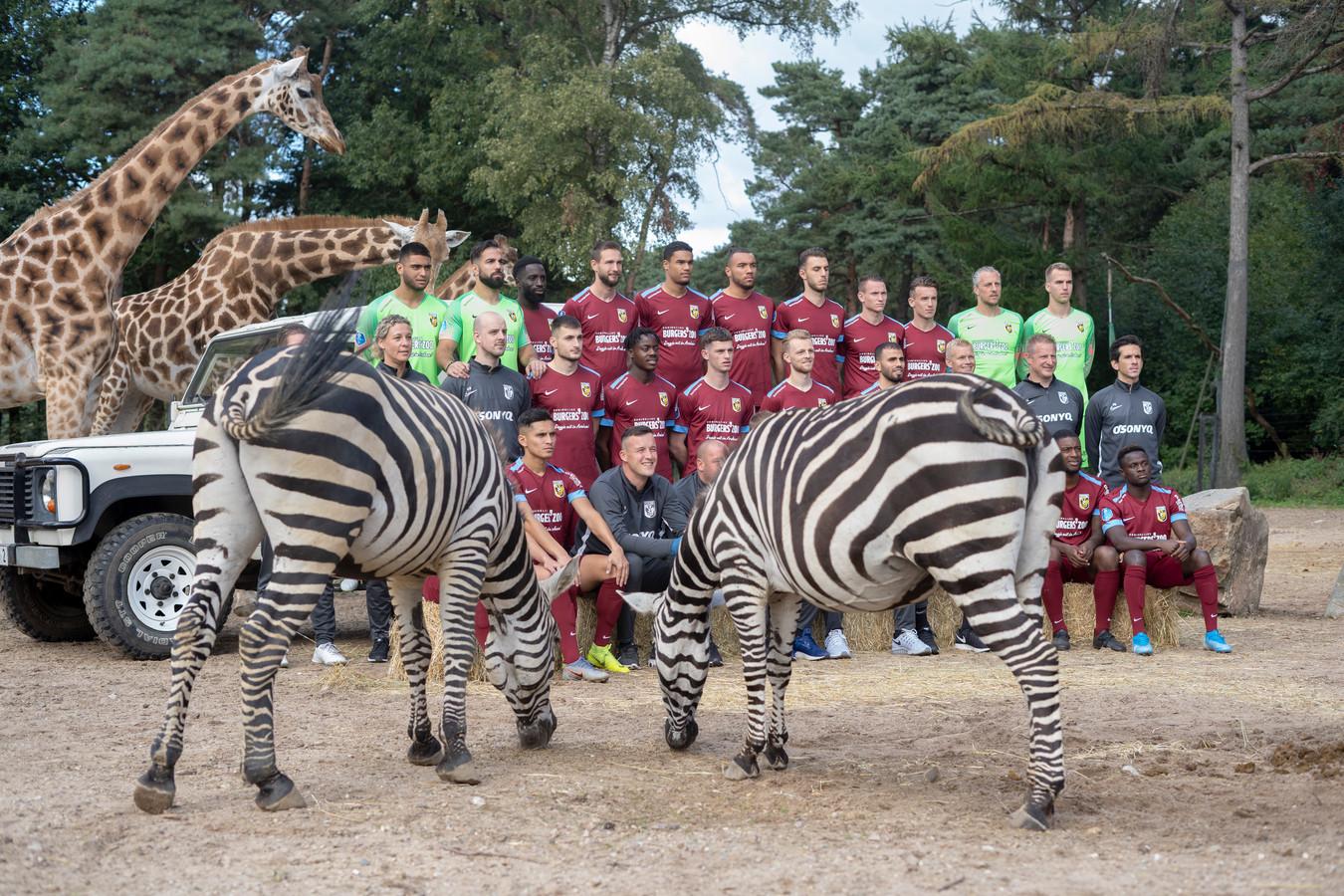 De zebra's van Burgers' Zoo lijken zich niet bewust van de fotosessie met de selectie van Vitesse in het safaripark.
