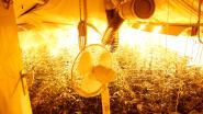 Trio riskeert twee jaar cel voor wietplantage van 380 plantjes in rijhuis