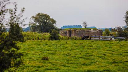 Bunkers in Damme voorlopig beschermd