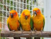 23 januari: Snacks maken voor vogels in Goes