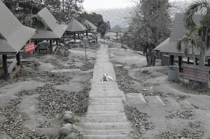 Sinds de vulkaan as uitbraakt, is het gehele gebied onder een dikke laag bedolven.