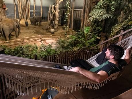 Elk halfuur gaat zijn wekker: verzorger Rob 'slaapt' bij de zwangere olifant in DierenPark Amersfoort