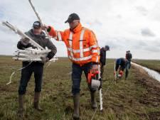 Kilometer lang hek weert roofdieren uit polder Arkemheen in broedseizoen