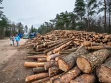 Ugchelen schrikt van massale bomenkap langs A1