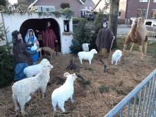 Het is een mysterie: waarom verdwijnen ieder jaar de schapen uit deze kerststal in Berg en Dal?