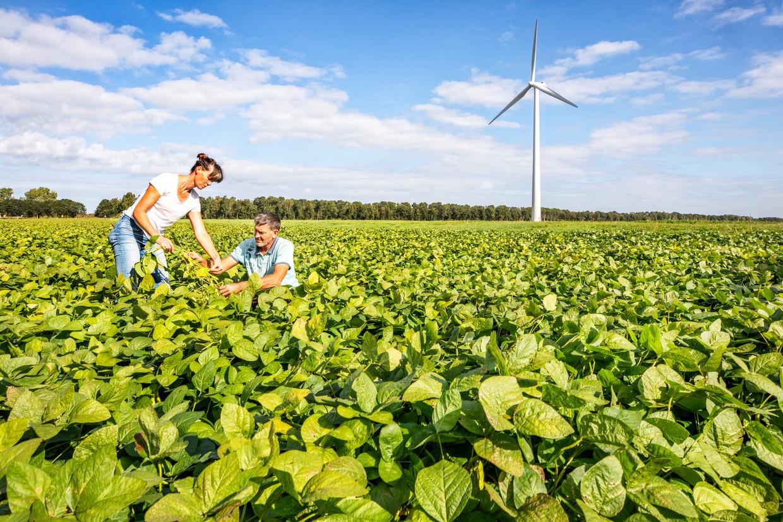 Mariette en Peter Romme tussen hun soja in Zeewolde.