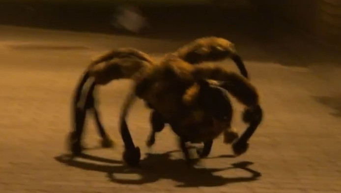 Hond In Spinnenpak Jaagt Mensen Stuipen Op Het Lijf Bizar Adnl
