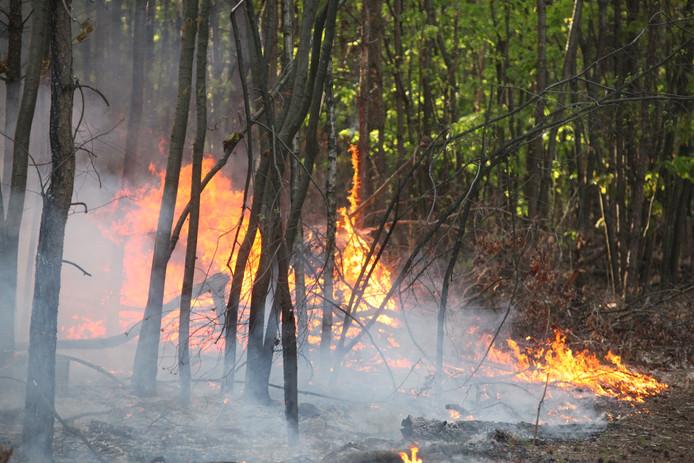 Bosbrand Oosterhout