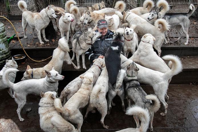 Marc van de Ven begon met twee husky's: Hristo en Branco. Nu heeft hij 34 honden en kent ze allemaal bij naam. Foto Kees Martens .