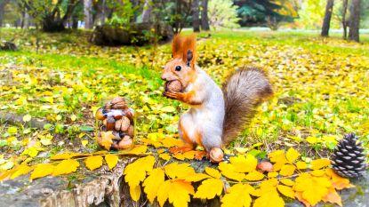 Man (61) sterft aan zeldzame aandoening na eten van eekhoorn