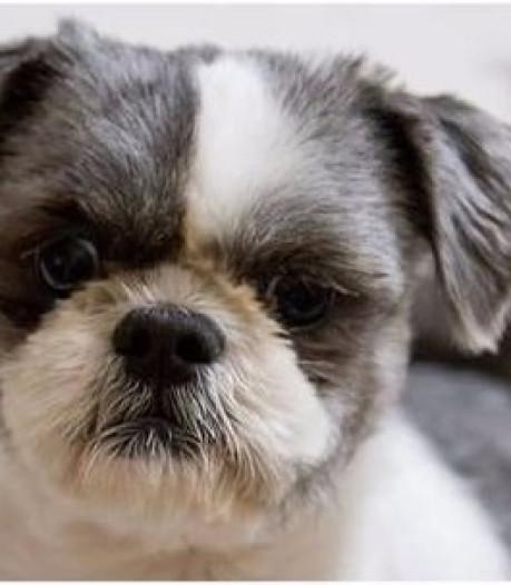 Deventer hondje Bekko is herenigd met zijn dolblije eigenaar