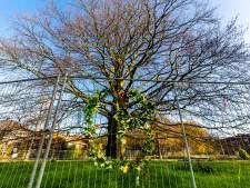 Iconische rode beuk in Wilhelminapark kondigt zijn afscheid aan: 'Kom samen met mij het leven vieren'