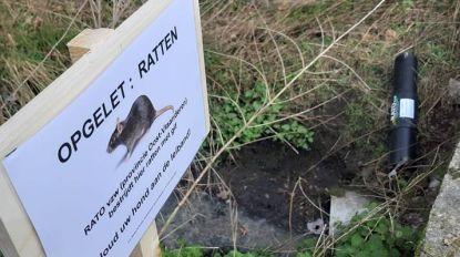 Borden waarschuwen hondenbaasjes voor rattengif