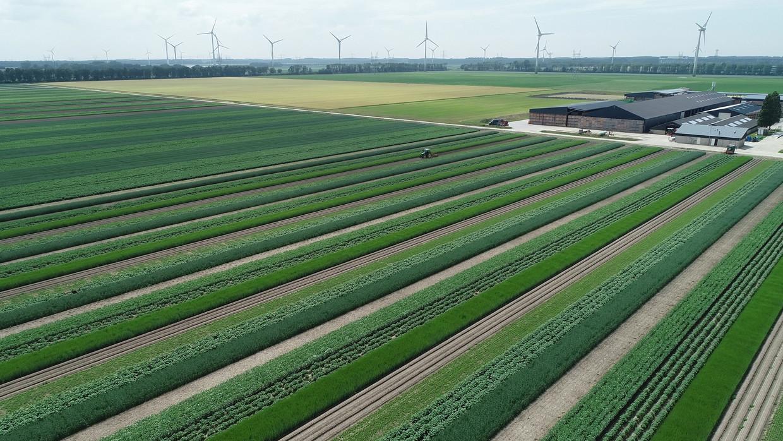 Strokenteelt op de Boerderij van de Toekomst bij Lelystad: aardappelen, uien, veldbonen en meer staan door elkaar heen.  Beeld Dronewerkers.nl