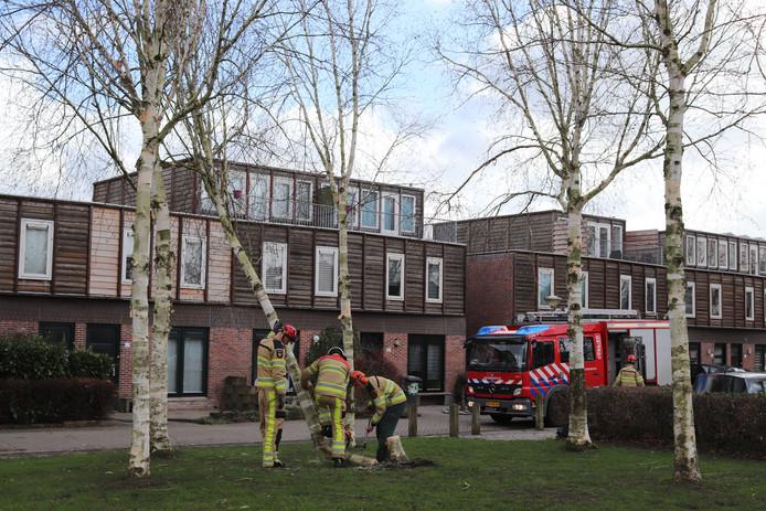 De brandweer voorkwam in Zwolle-Zuid dat een boom omviel op naastgelegen huizen. De boom was door de wind uit de grond gekomen.