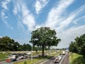 Bomenstichting wil opnieuw onderzoek troeteleik