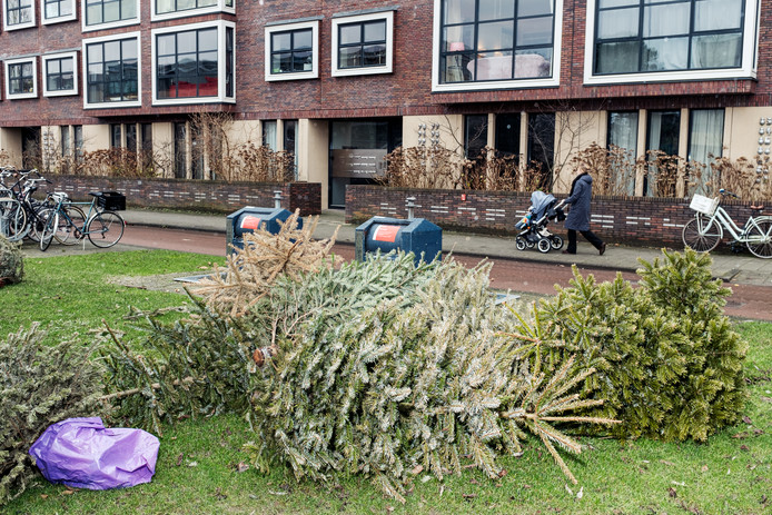 Kerstbomen op de Afroditekade.