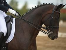 Marijn van Kralingen wint met neuslengte verschil
