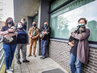Dierenvoedselbank breidt uit met oppas- en uitlaatdienst voor honden