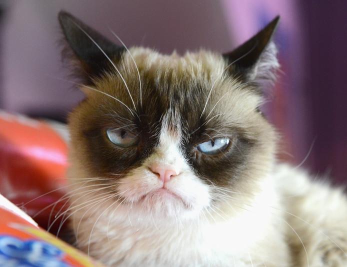 Grumpy Cat heeft wereldwijd miljoenen volgers op onder meer Instagram en Facebook.