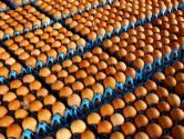 Kunnen we weer eierkoeken en kipfiletjes kopen?