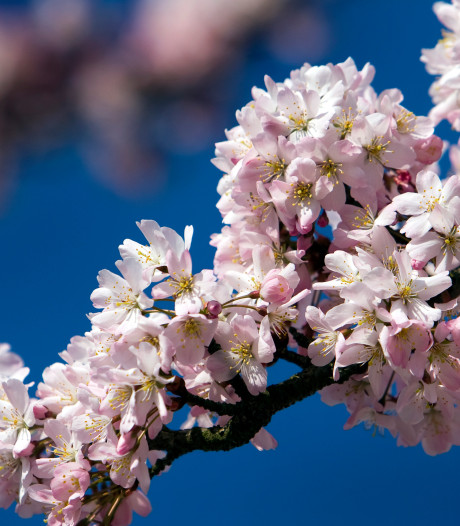 Gratis bomen in Apeldoorn in mum van tijd uitverkocht