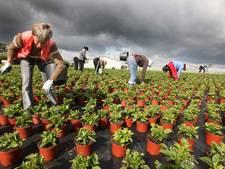 Buurt boos over arbeidsmigranten in jeugdherberg